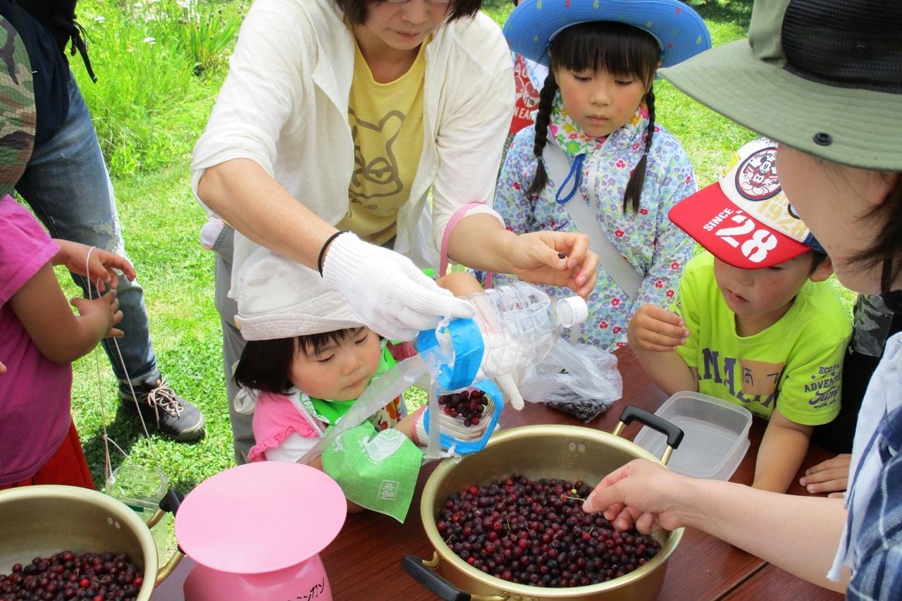 ジューンベリー収穫体験